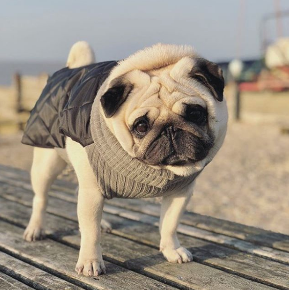 The Quilted Snood Coat