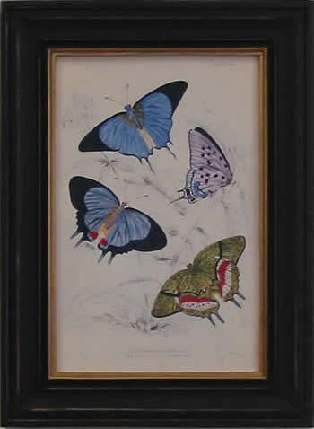 Blue Green Butterfly Art Print - The National Memo