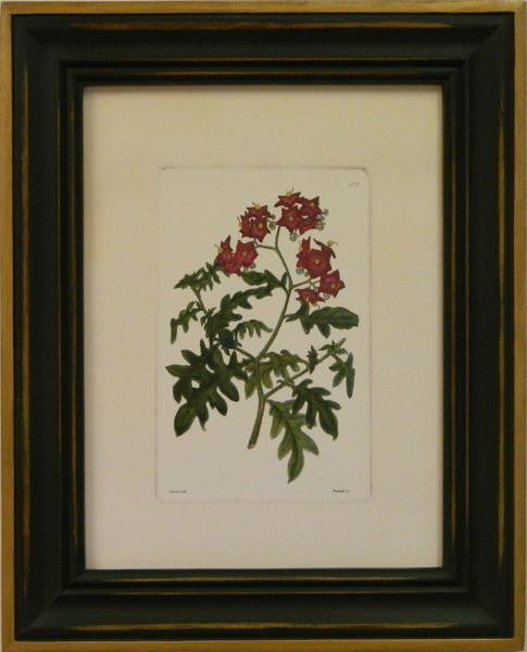 Red Curtis Botanical III Art Print - The National Memo