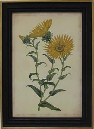 Curtis Blooms Yellow II Art Print - The National Memo