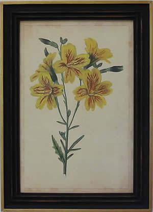 Curtis Blooms Yellow IV Art Print - The National Memo