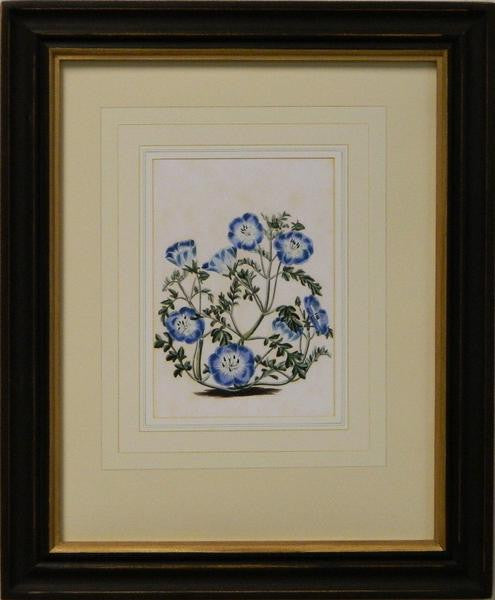 Vintage English Botanical Study Blue III Art Print