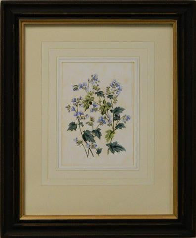 Vintage English Botanical Study Blue V Art Print - The National Memo