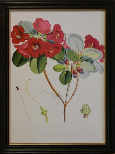 Rhododendron VIII Art Print - The National Memo
