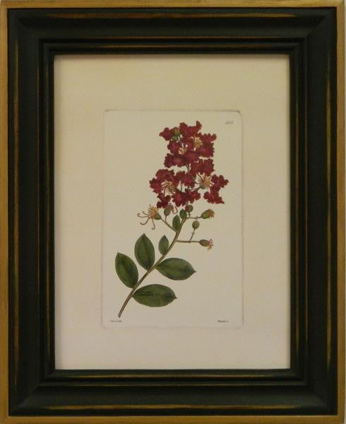 Red Curtis Botanical II Art Print - The National Memo