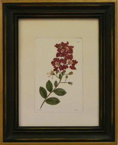 Red Curtis Botanical II Art Print
