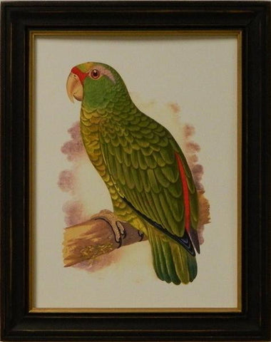 Antique Parrots II Art Print - The National Memo