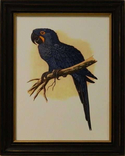 Antique Parrots IV Art Print