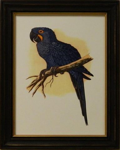 Antique Parrots IV Art Print - The National Memo