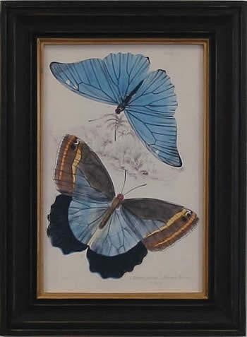 Blue Butterfly Art Print - The National Memo