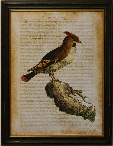 Antiquarian Bird III Art Print