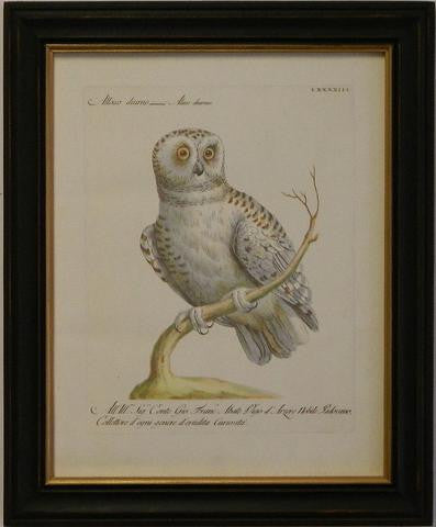 Manetti Owl II Art Print - The National Memo