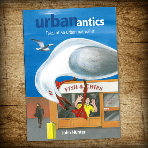 Urban antics: Tales of an urban naturalist