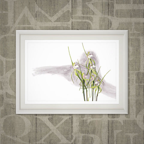Quindanning spider orchid print
