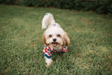 Kickee Pants Print Dog Tee - Union Jack