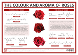 compound chem visual about the rose