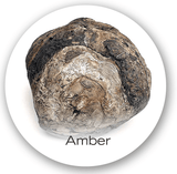 amber in parfums