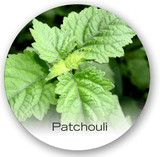 patchouli in parfums