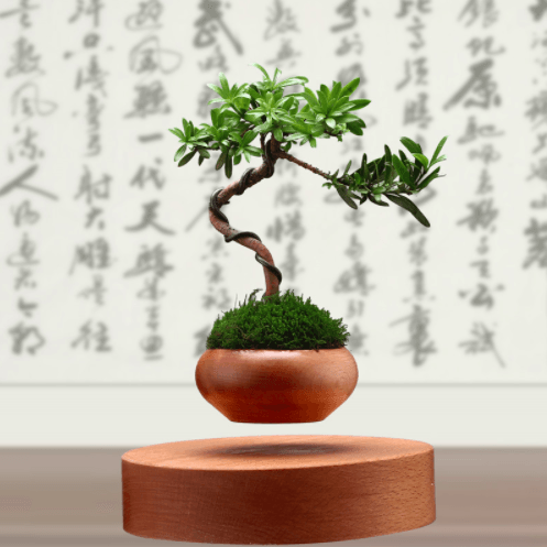 Wooden Bonzai Levitating Planter
