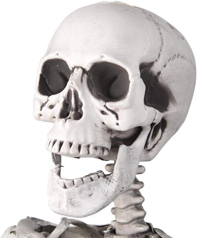 Image of 5ft Life Size Posable Full Body Skeleton Prop for Halloween Party (5ft Skeleton)