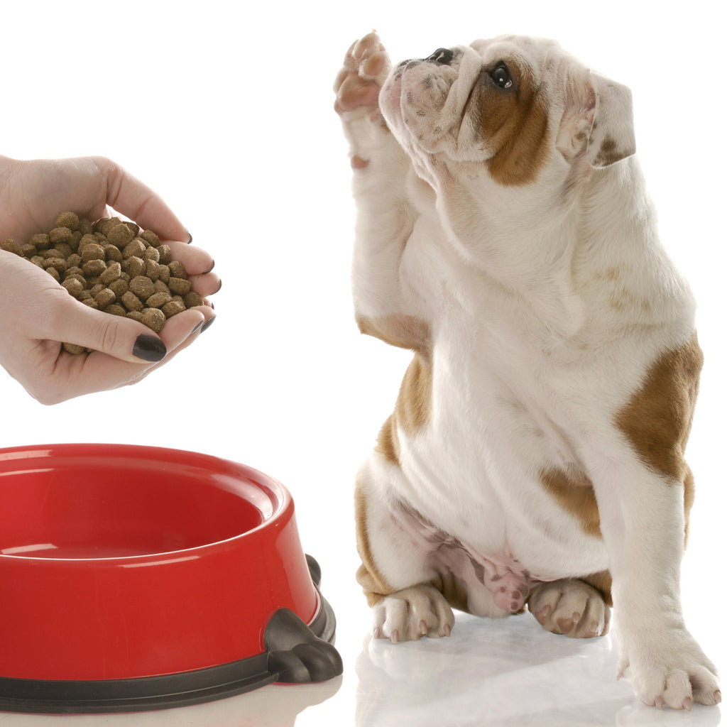 Dog Food Kibble Facts. Dry Dog Food Convenience vs
