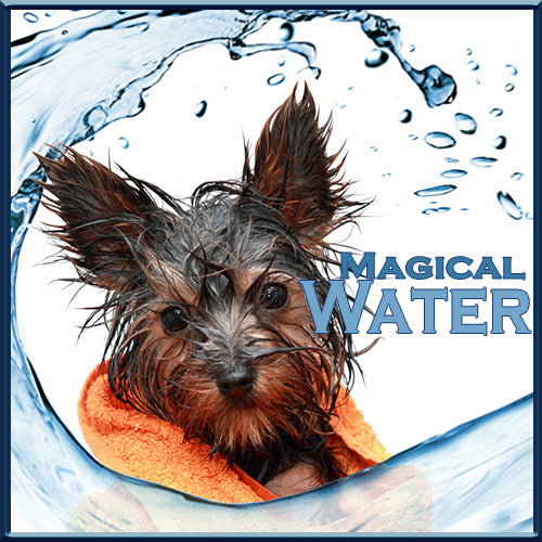Magical Water - Elixir of Life -7 Reasons Why Your Dog Needs Water