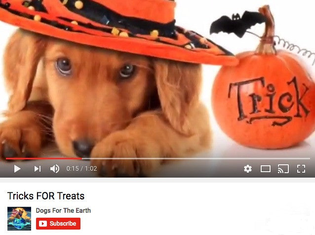 """Trick or Treats"" Don't Forget the Dogs!"
