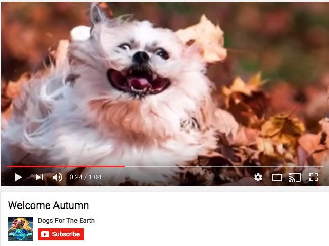 Dogs For The Earth Welcome Autumn