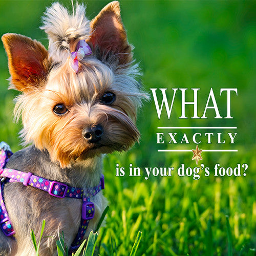 What's In Your Dog Food? Is It Safe? Dangerous Dog Food Ingredients.