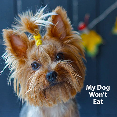 Why won't my dog eat?