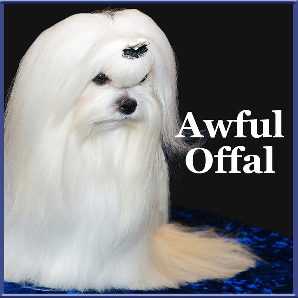 awful offal maltese dogs  want dogs for the earth