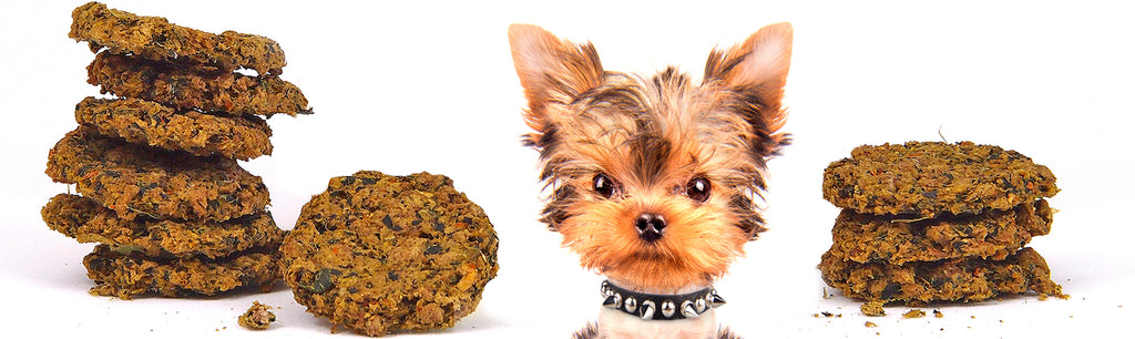 Dogs For The Earth Organic Dehydrated Dog Food - biscuits and yorkie