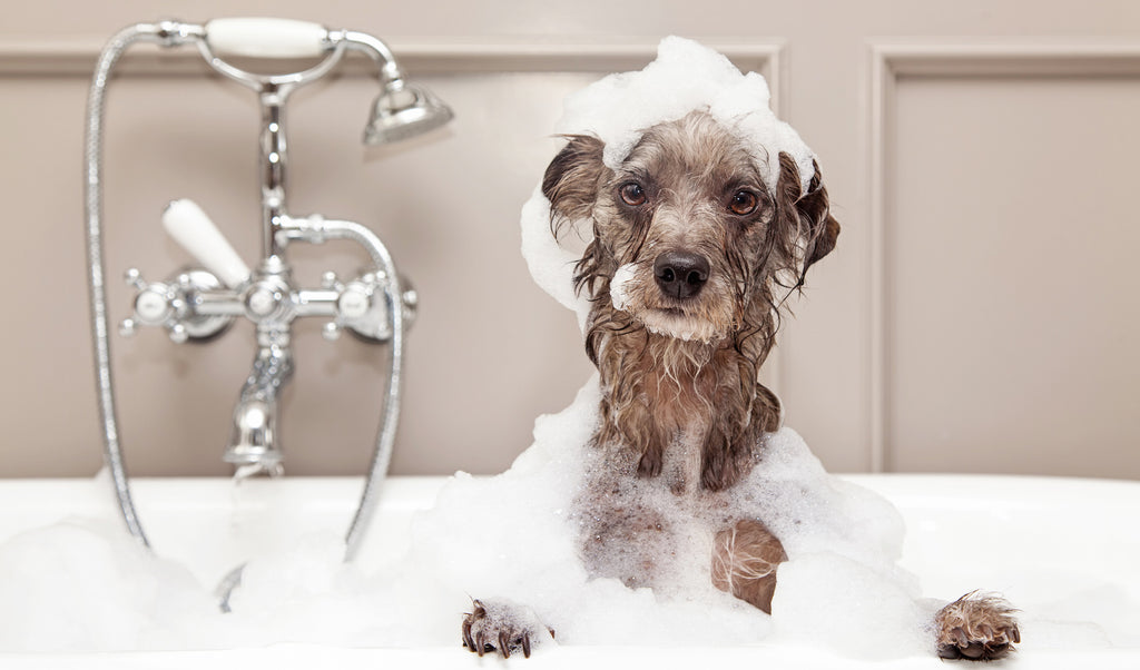 Dog taking a bath full of Dogs For The Earth Organic Grooming Products