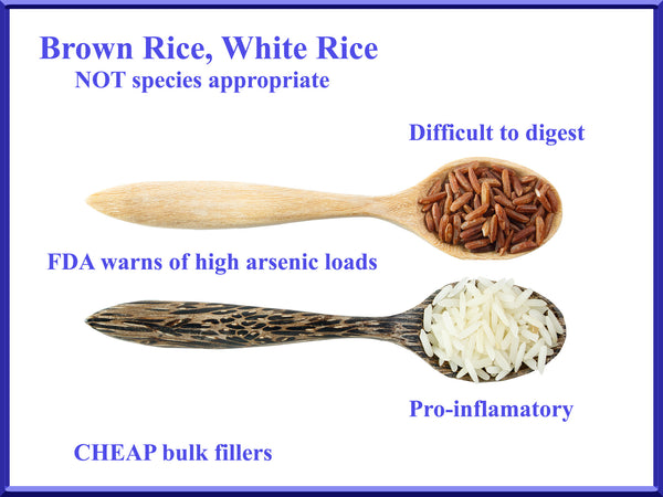 rice is toxic for dogs - unsafe foods for dogs - rice causes allergies in dogs