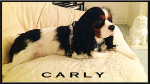 Carly - Testimonial at Dogs For The Earth