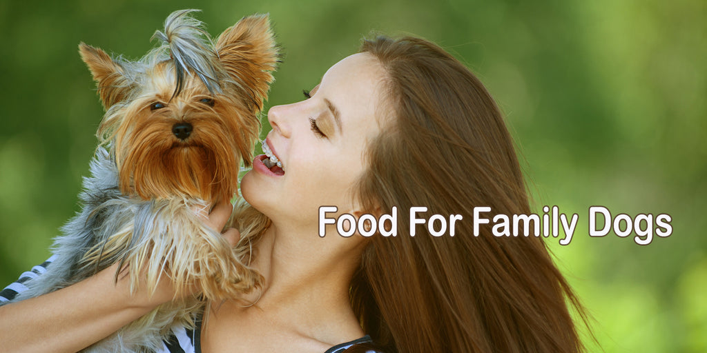 Yorkie Food and food for family dogs - dogs for the earth organic dog food