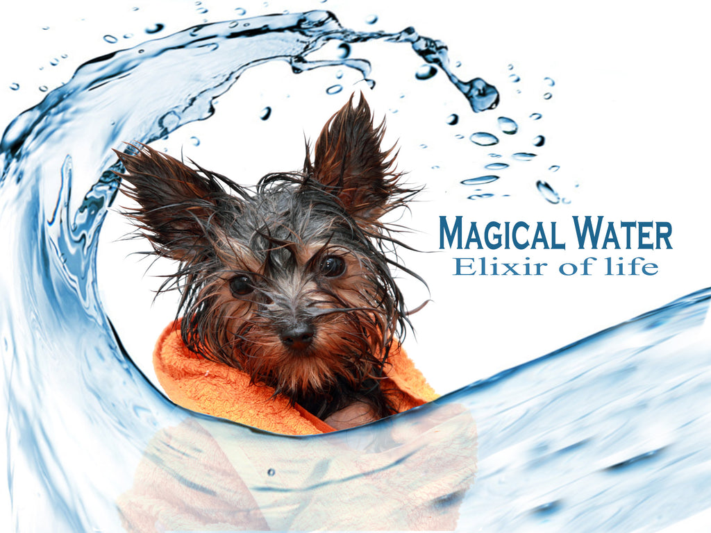 magical water - water requirements for dogs - my dog wont drink - tips to help dogs drink - why dogs need water -