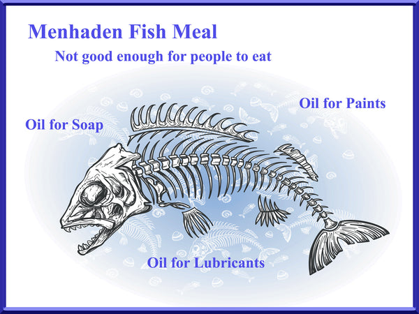 menhaden fish oil used for paint - menhaden fish oil toxic for dogs