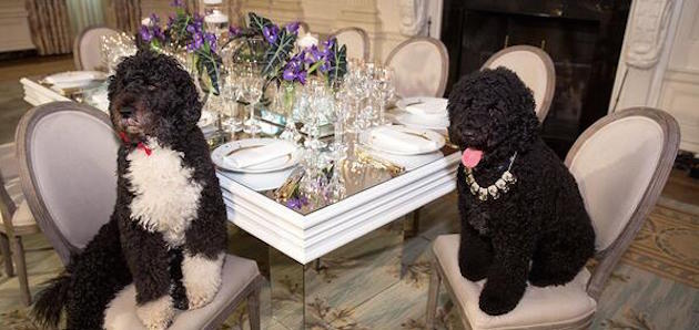 Michelle Obama Dogs sit at the dinner table for a gourmet meal - blog Food for Picky Eaters by Dogs For The Earth