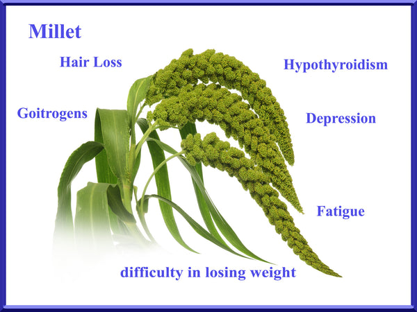 millet is unsafe for dogs - millet is toxic for dogs - millet is difficult to digest for dogs - millet is for the birds
