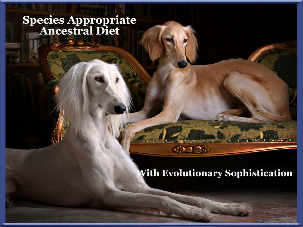 species appropriate ancestral diet greyhounds dogs for the earth