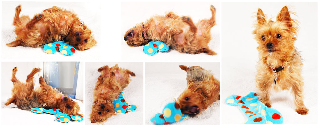 Dogs For The Earth Tiffany West Paw Design Toys