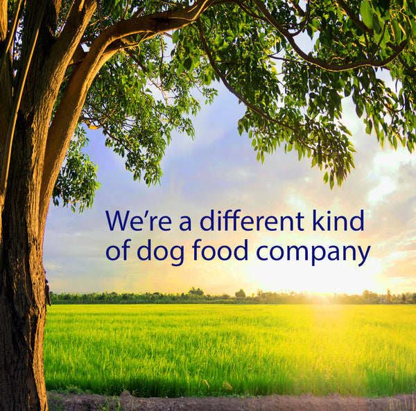 dogs for the earth organic dog food - best dog food - healthy dog food - grain free dog food