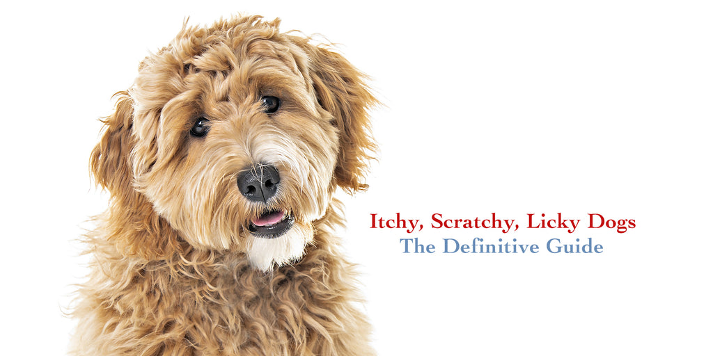 goldendoodle help for itchy scratchy dogs the definitive guide