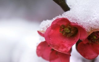 The benefits of gardening in the winter
