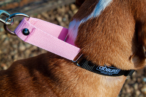 properly fitting martingale collar on dog