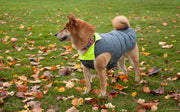 dog wearing grey winter dog coat