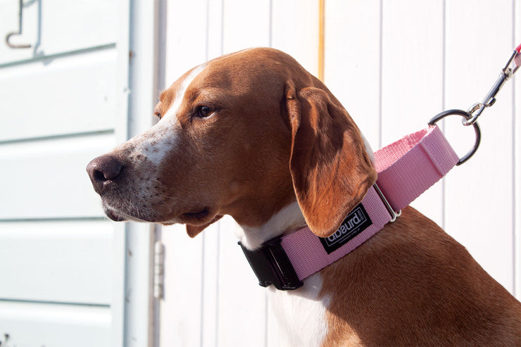 dog wearing wide pink martingale collar