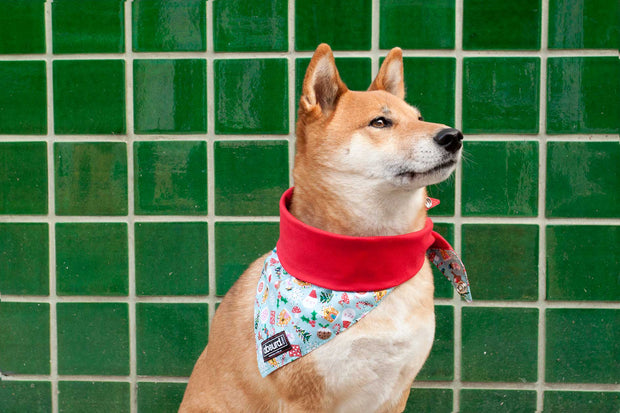 dog wearing festive Jolly Holly Days dog bandana from Absurd Design