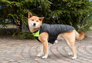 dog wearing black puffer dog coat